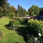 Dahliengarten in der Lichtentaler Allee feiert 10 Jahre Bestehen