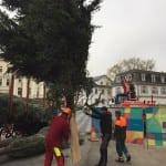 Weihnachtsbaum wird Leopoldsplatz schmuecken